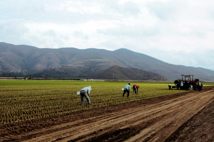 Farmworkers in Oxnard (Steve Martinez/CC BY-NC-ND 2.0)