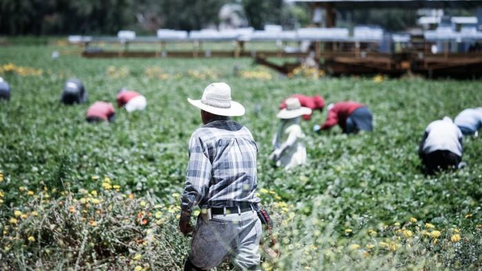Trabajadores del campo en Oxnard (Alex Proimos)
